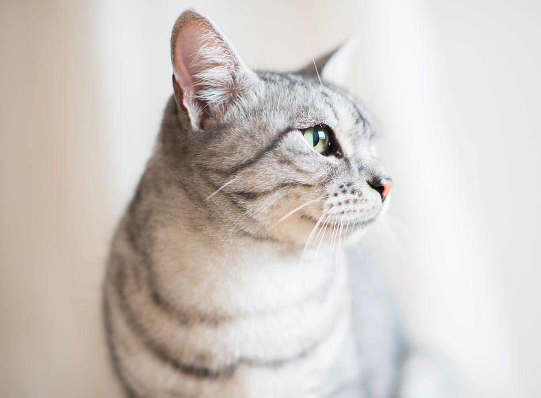 Crocchette per gatti, Schesir